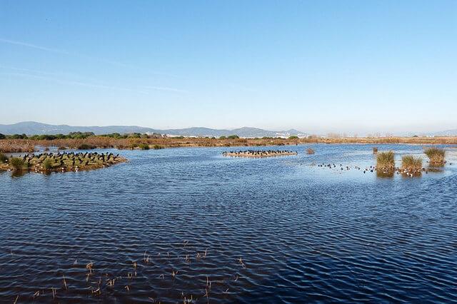 Delta del Llobrega