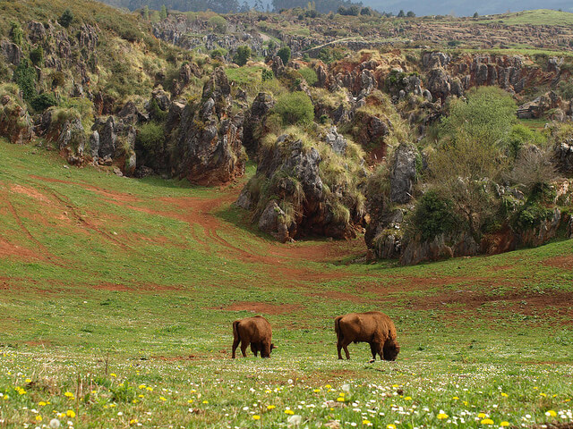 parque natural cabarceno